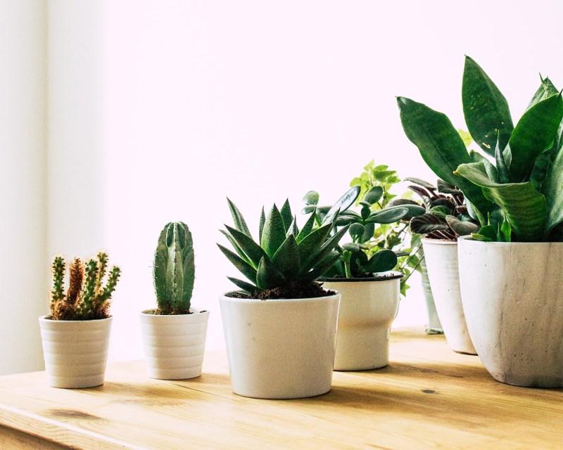 7 o guia completo para escolher o melhor vaso para suas plantas Vision Art NEWS