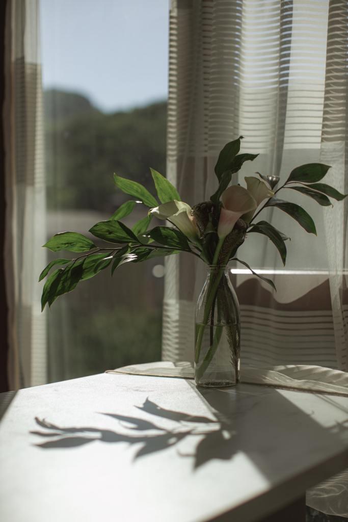 Feng Shui Como incluir plantas na sua casa seguindo a prática 03 Vision Art NEWS