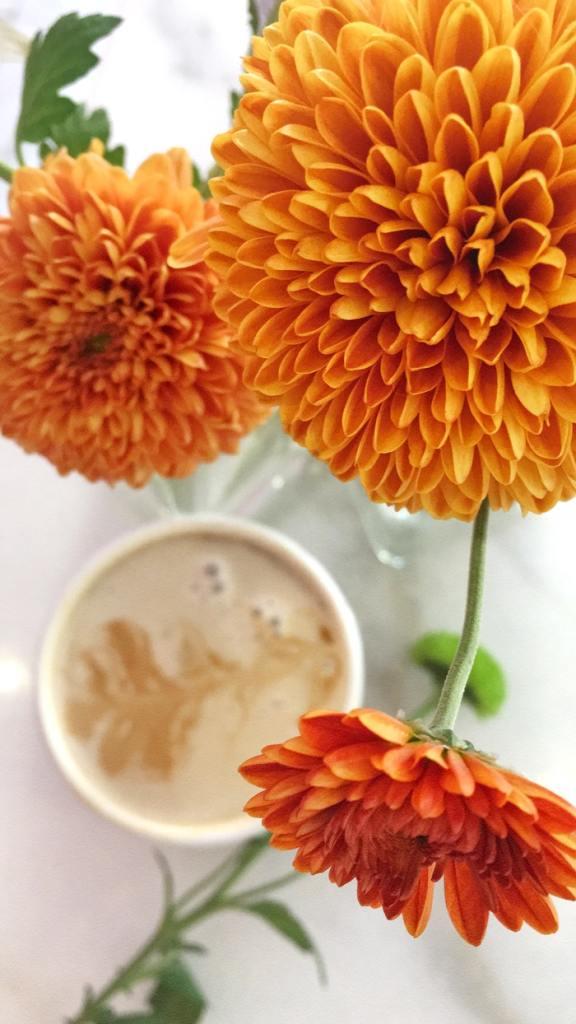 dalia flores jardim dicas cultivo pexels анна орлова 02 Vision Art NEWS