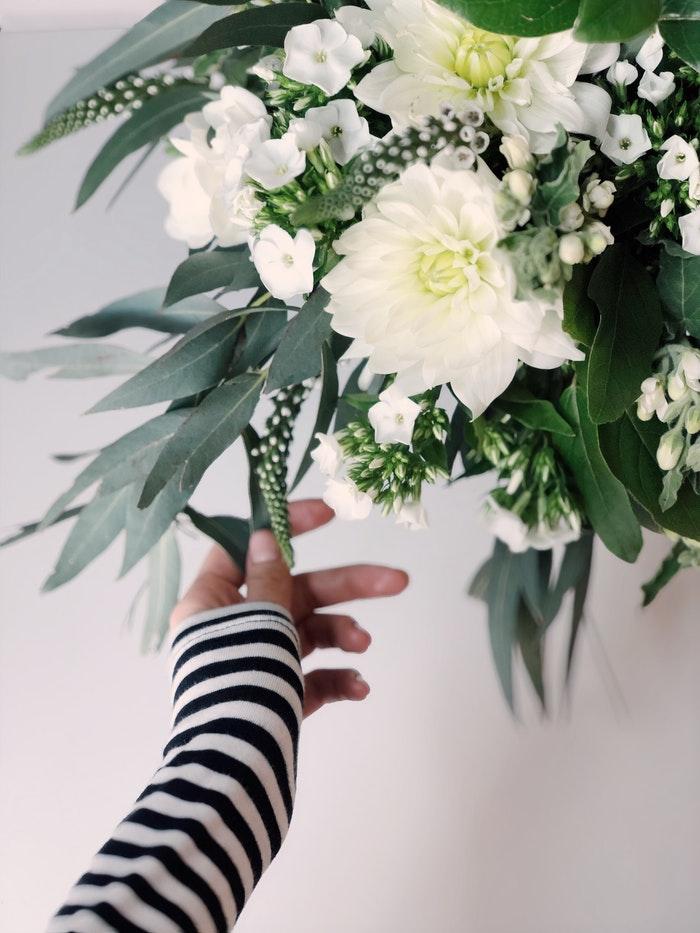 dalia flores jardim dicas cultivo pexels daria shevtsova Vision Art NEWS