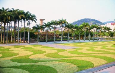 """""""Ondas"""" em grama em frente ao MAM, também situado no Parque do Flamengo. Palmeiras imperiais para deixar tudo mais monumental. Pura bossa! Imagem: escritório Roberto Burle Marx (burlemarx.com.br"""