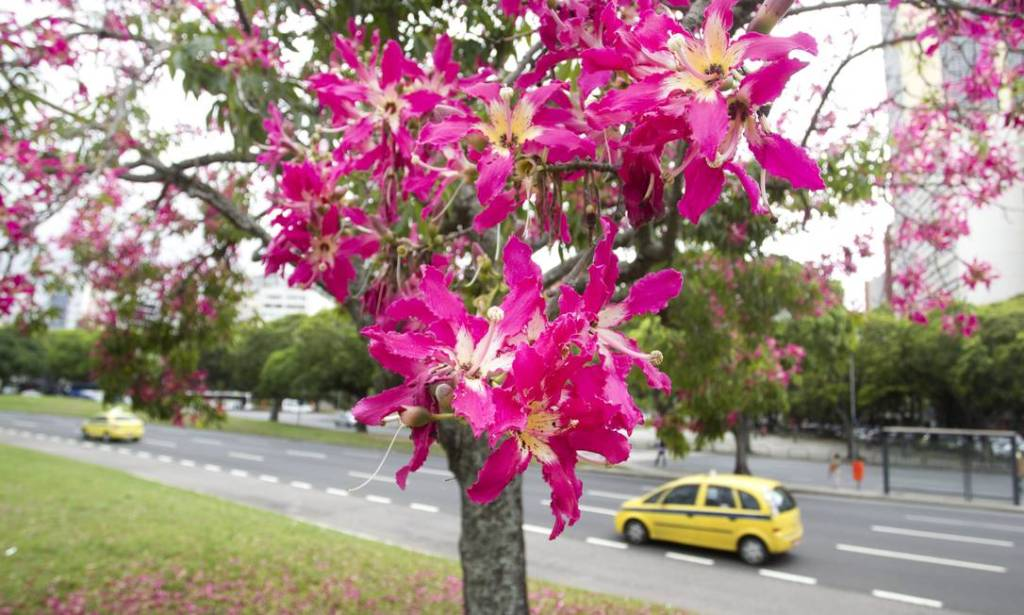 casa-ao-cubo-aterro-flamengo-flor-oglobo