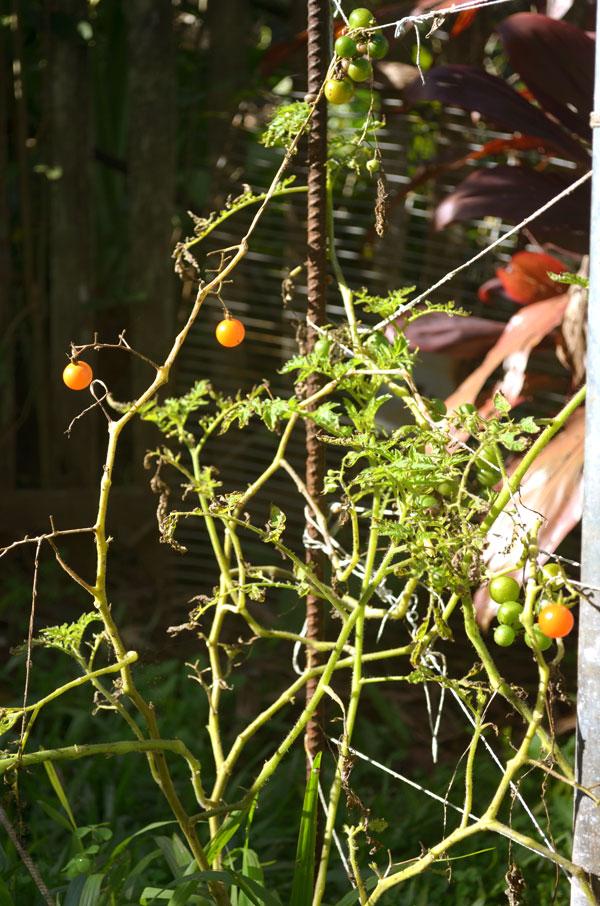 jardim-casa-baunilha4
