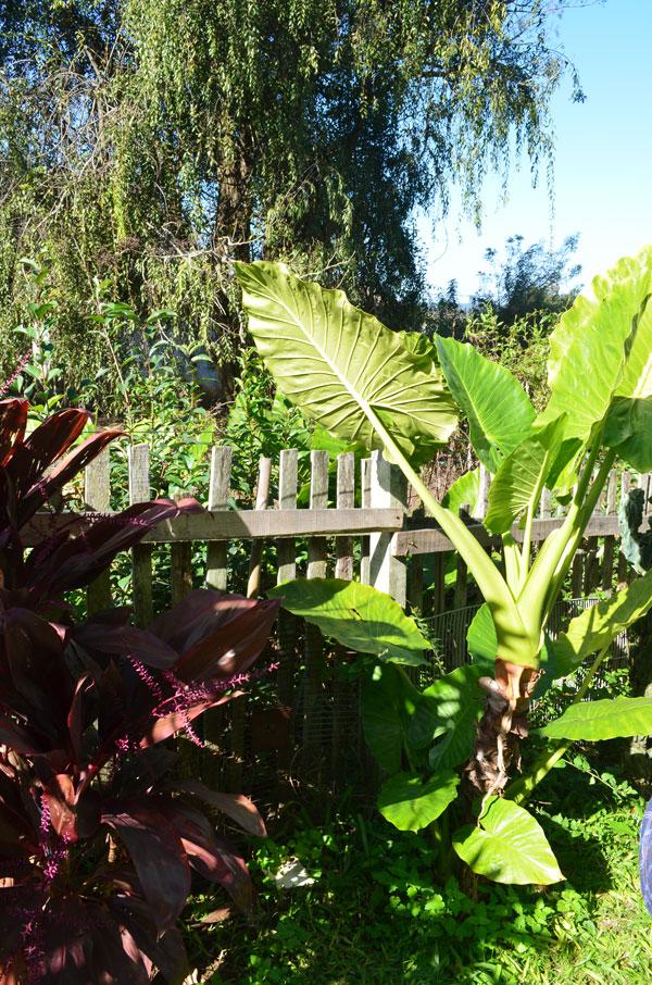 jardim-casa-baunilha5