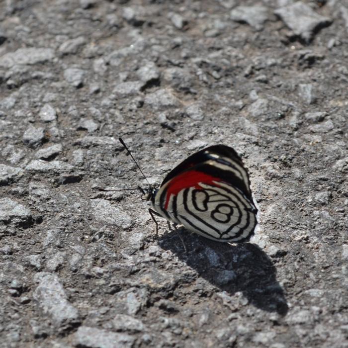 casa-baunilha-borboleta