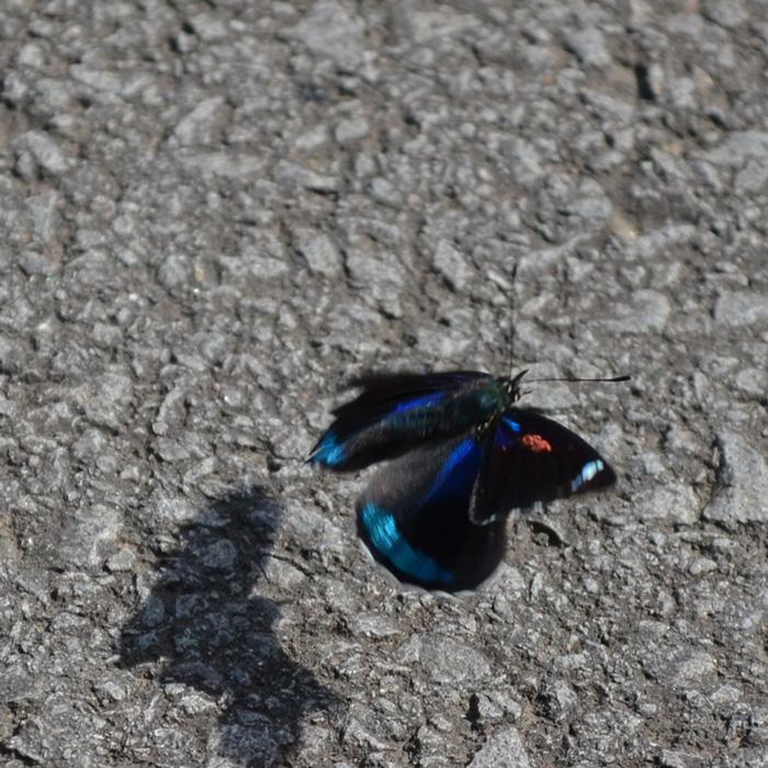 casa-baunilha-borboleta2