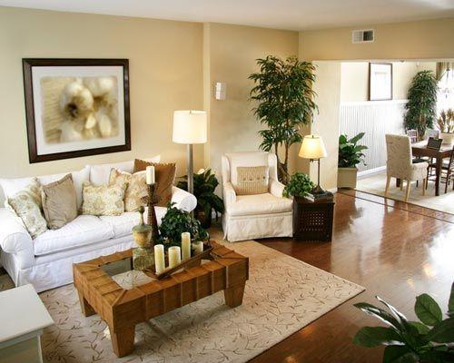 9 PIANTE FACILI DI TENERE CHE DEPURANO LARIA IN CASA 9 Houseplants That Clean The Air And Are