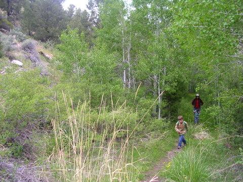 Great Basin 2009 Pole Creek