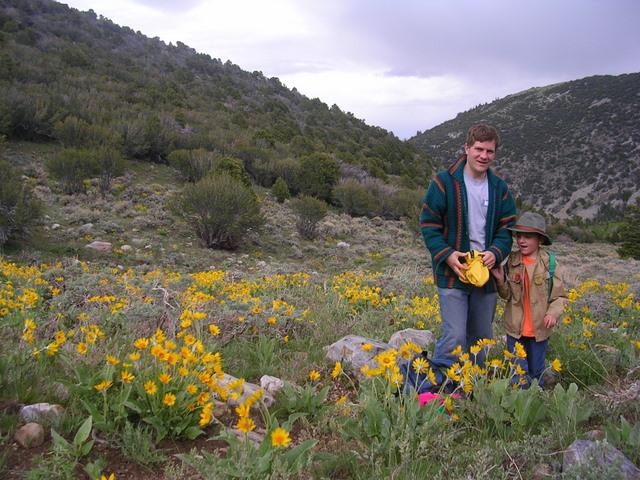 Great Basin 2009 Wildflowers