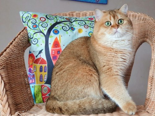 Hand-Painted Retro Cushion Cover photo review