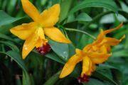 934807_orchids_2