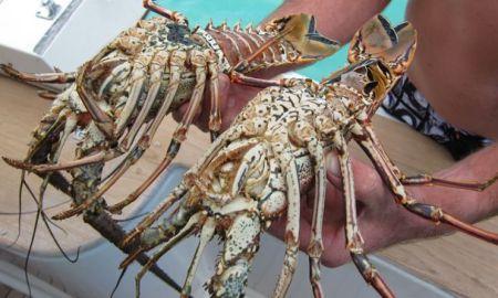 lobster dominican republic