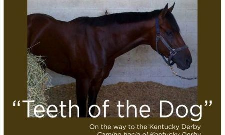 teeth of the dog horse