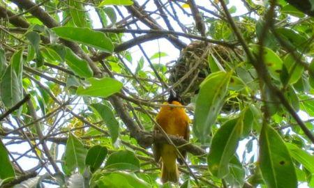 madame saga bird