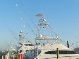 Chasin Tail relased 7 Blue Marlin. 22 of April