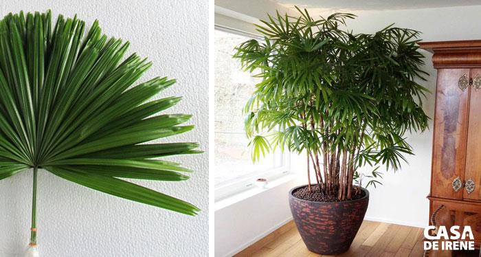 20 Plantas que Vivem Dentro de Casa  Casa de Irene