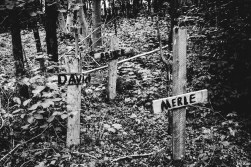 20160624_DTRH_Swamp-9465