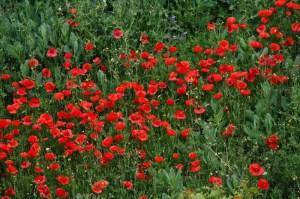 evviva-la-primavera-la-vita-e-lamore-8cfc1d26-60ae-449b-95b4-f1dd9b186502