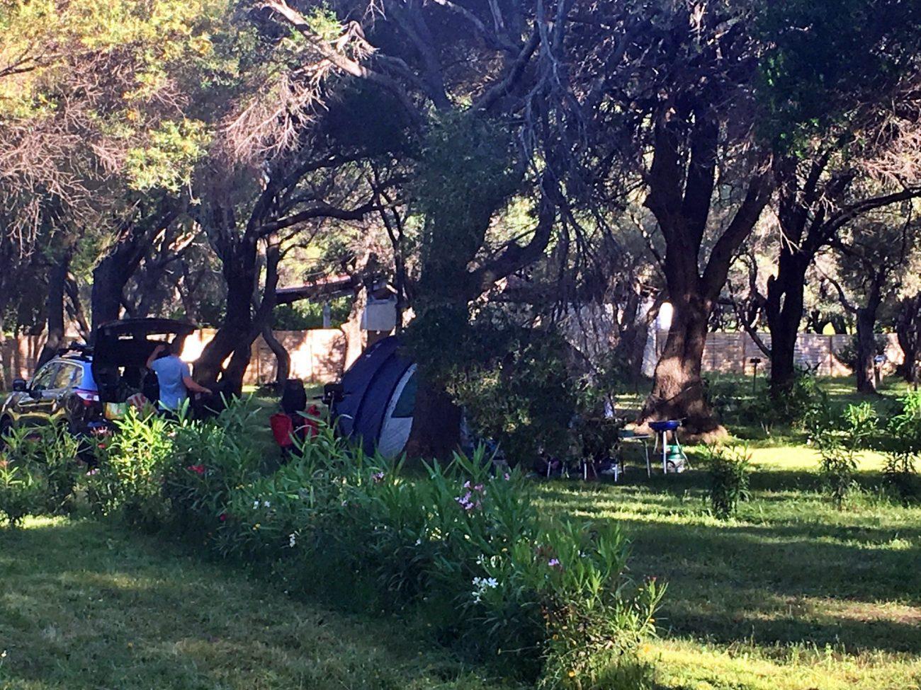 Emplacements de camping à l'ombre des oliviers