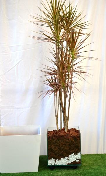 Plantas para Sala 16 melhores espcies para decorar o