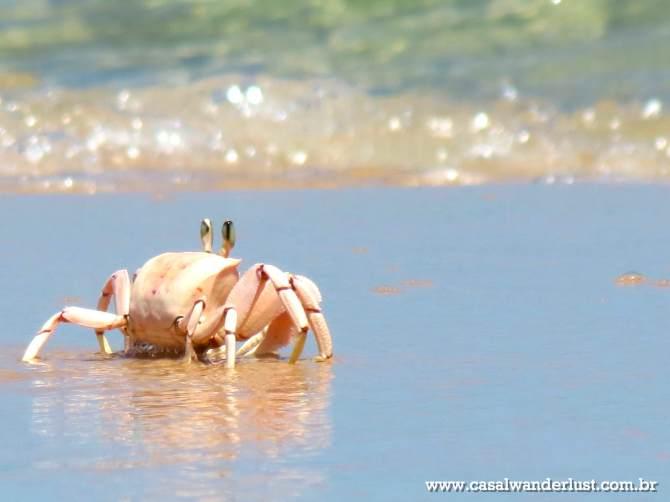 Crab Bazaruto