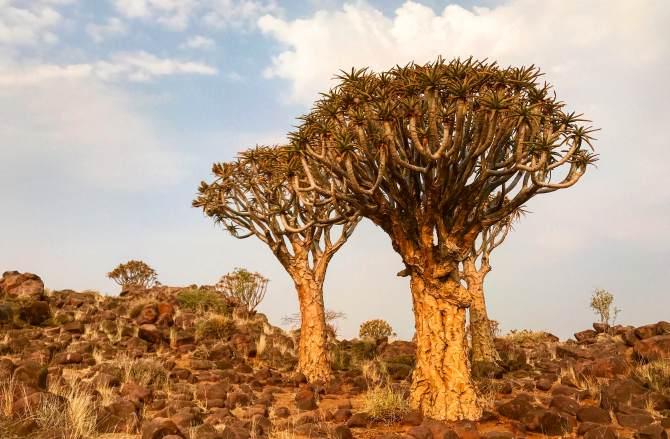 Roteiro de 15 dias pela Namíbia