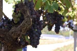 Lazio_WineExcursion