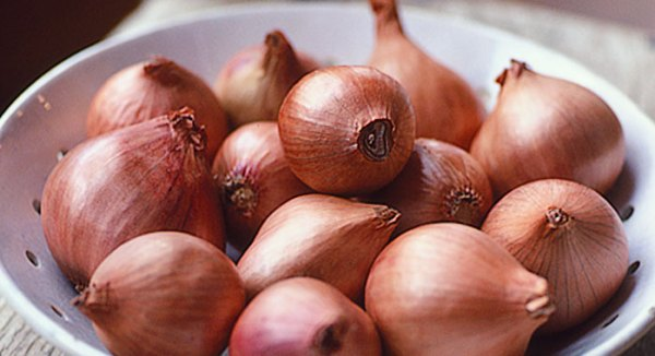 scalogno is shallot in Italian