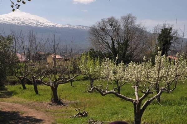 Our Italians: Bruno Ferrara Sardo · www.italyfoodandwinetours.com