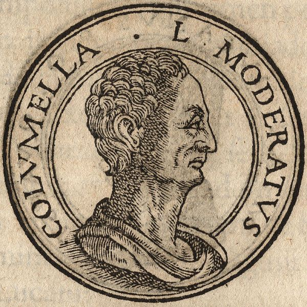 Lucius Junius Moderatus Columella mentions coriander in his writings