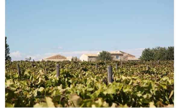 Hyblaean vineyards