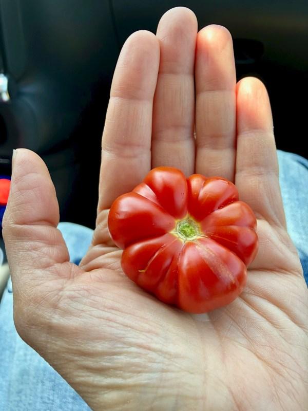 merinda tomato