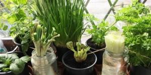 regrowing reduces food waste