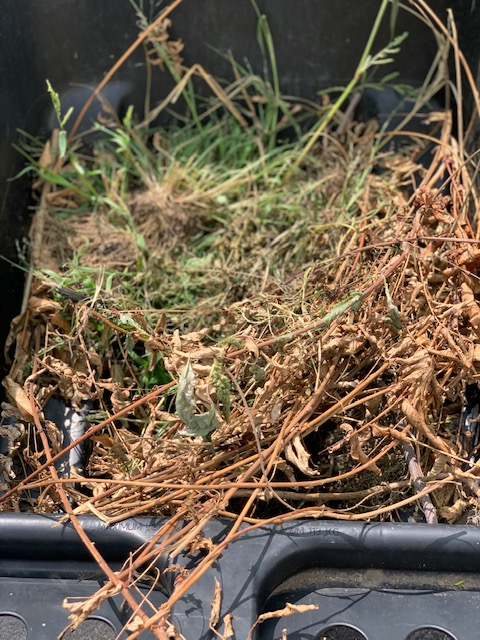 the compost bin