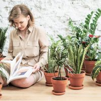 Arredare casa con le piante: 5 consigli per iniziare