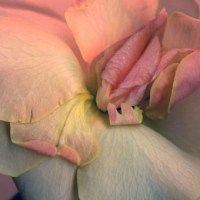 As melhores vaginas da natureza