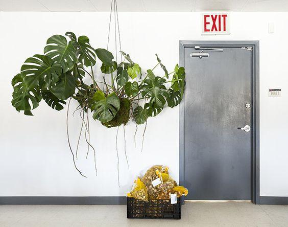 cómo decorar con plantas