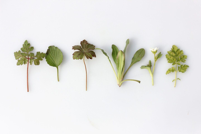 hojas de hierbas y plantas
