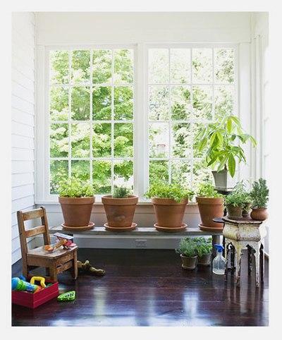 Consejos para Plantas de Interior