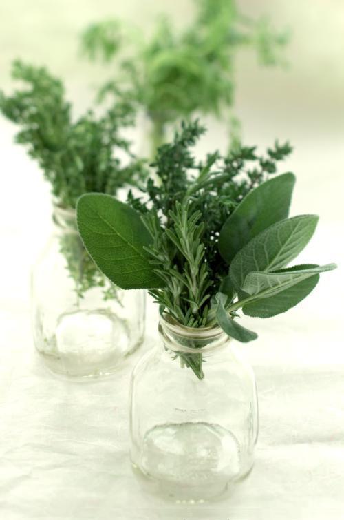 hierbas condimentarias para comidas