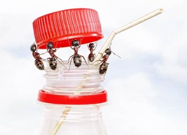 C mo ahuyentar insectos en verano for Como eliminar los mosquitos del jardin