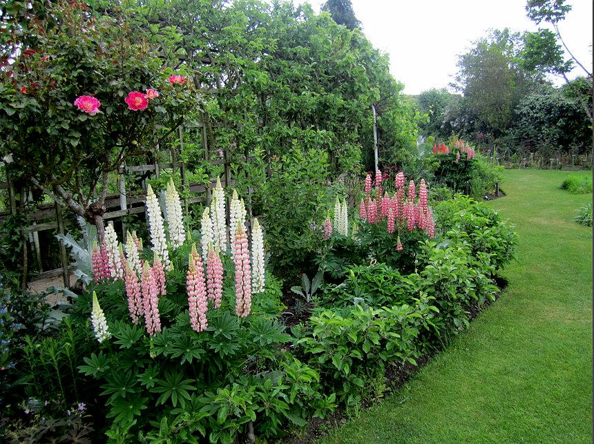 Consejos tiles para el cuidado del jard n en verano for Cuidados del jardin