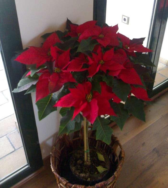 Navidad 12 ideas para decorar la casa continuaci n - Centros florales navidenos ...