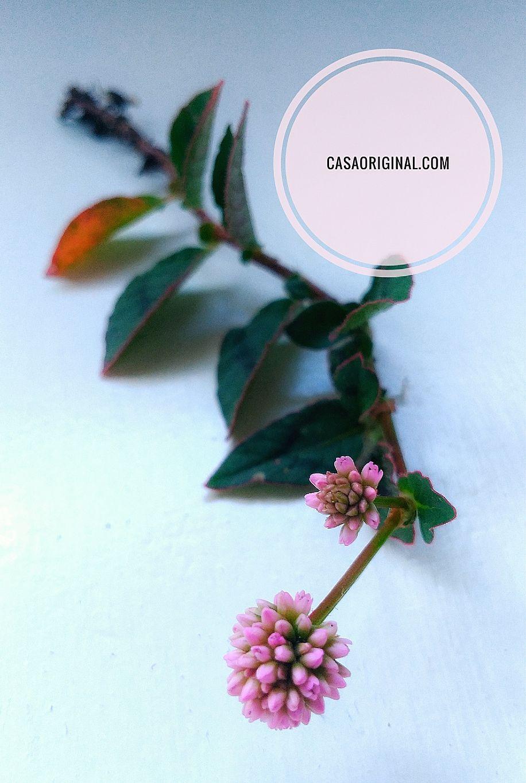 plantas con flores para el jardín