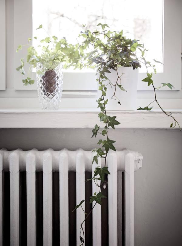 plantas en altura