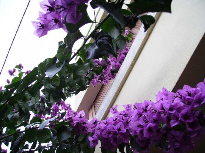 plantas-trepadoras-clasificacion-2
