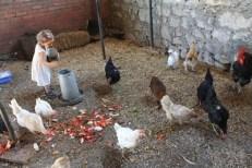Los restos para las gallinas