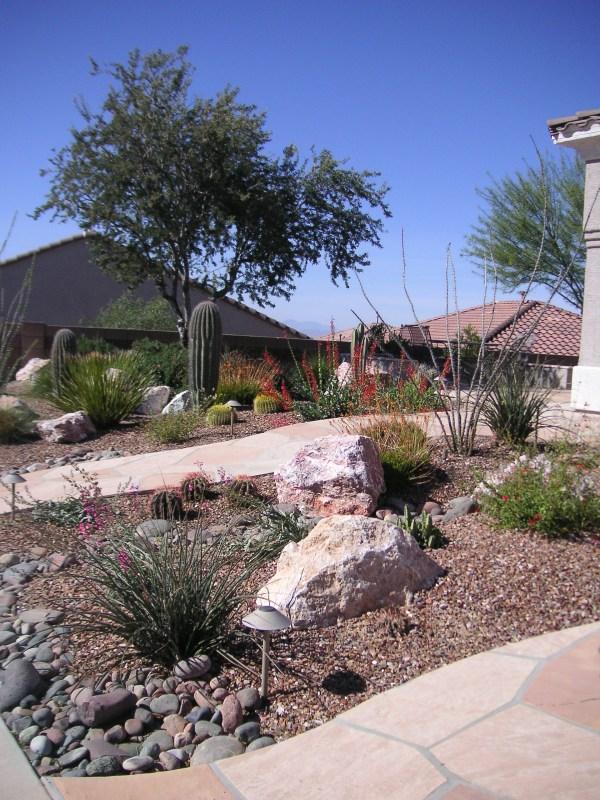 desert plants landscape design