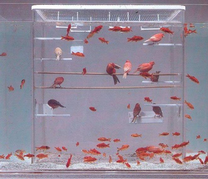 πουλιά-και-ψάρια-μαζί