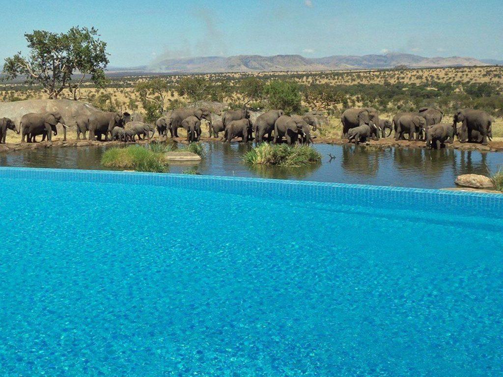 25 piscinas espectaculares a las que vas a querer ir este